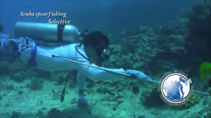 Mythbusting - Scuba spearfishing (October 22, 2014) (0:31 Minutes)
