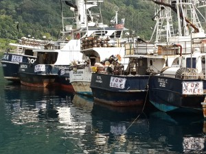 Row of American Samoa longliners offered for sale in January 2014 reflects the fishery's lack of profitability.